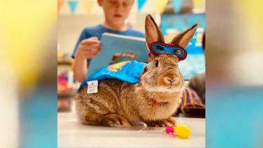 iLEAD Super Bunny